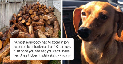 Photo Tricking Dog Hides In Plain Sight; Blending Perfectly In A Pile Of Logs