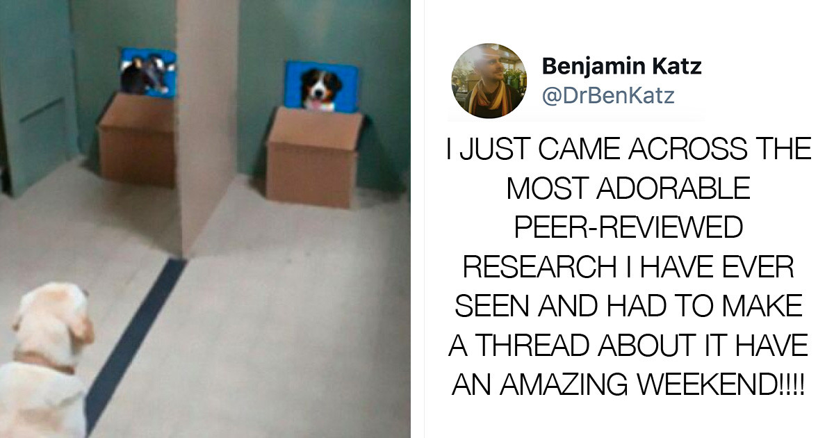 Researchers Try To Discover How Dogs Recognize Other Dogs, And Their Work Goes Viral Because It's So Adorable