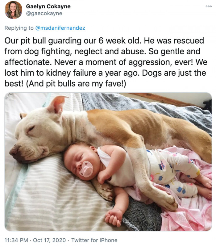 20. A rescue dog and a baby.