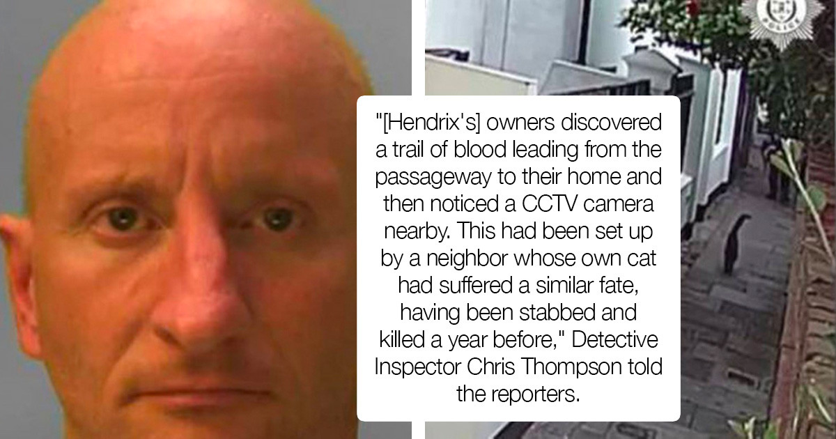 Security Guard From Brighton, UK Was Found Guilty Of Stabbing 16 And Killing Nine Cats Warning: Animal Cruelty