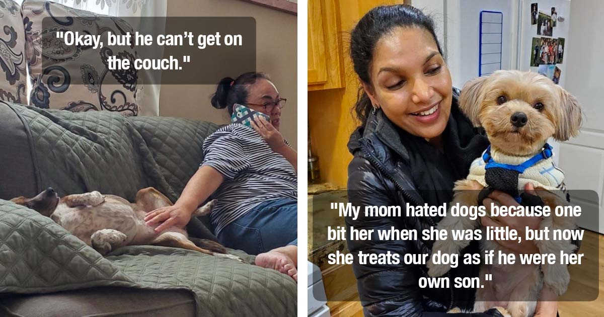 17 Stories About Mothers Who Said They Hated The Idea Of Having Pets But Were Quick To Change Their Minds
