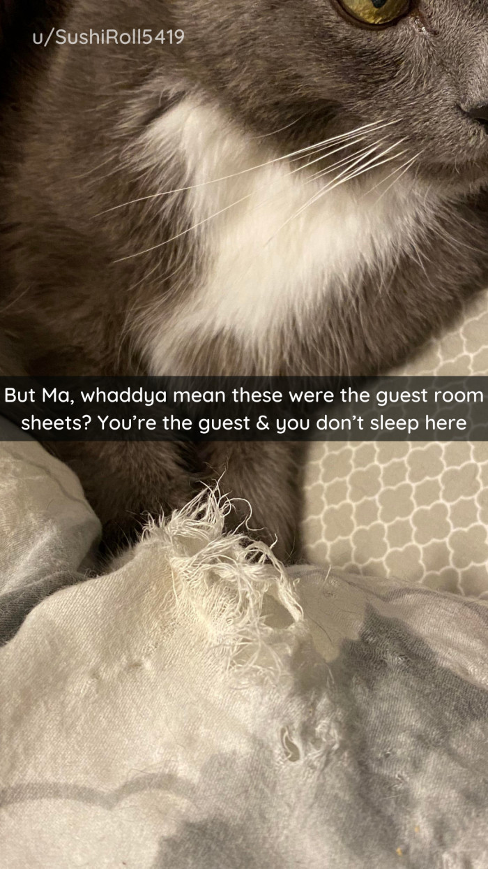 29. You are always a guest in the cat's house.