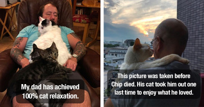 Adorable Cat Dad Photos Showing How Special The Bond Between Daddy And Cat Is