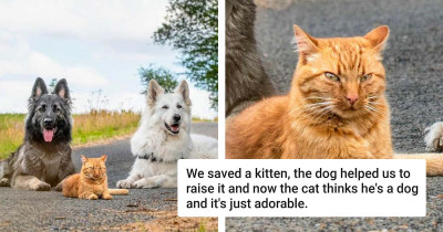 Cat Rescued And Raised By Dog Siblings Thinks He Is A Dog Too