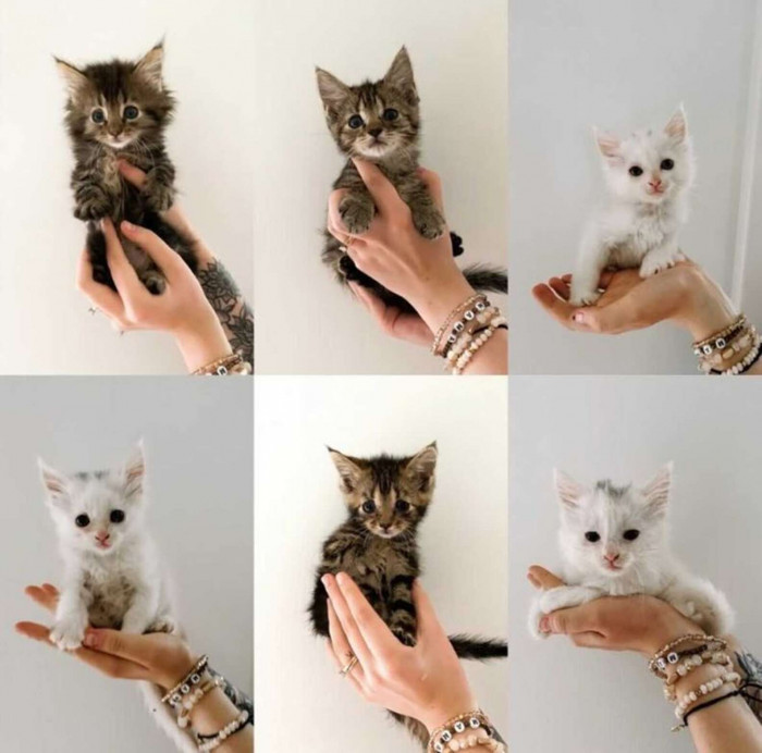 Dove gave birth to six beautiful kittens!