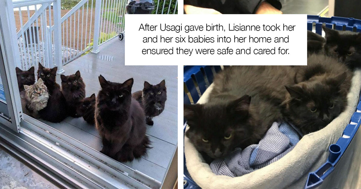 Stray Cat Brought All Her Adorable Babies To A Woman She Knew Would Help Them