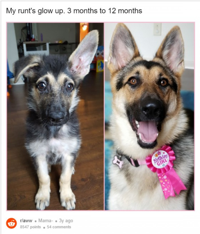 7. Thee months to 12 months. Ear up for this!