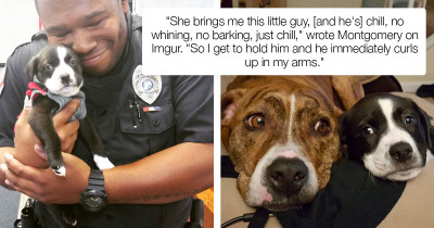 Puppy Lives Happily Ever After When A Police Officer Responds To A Routine Call