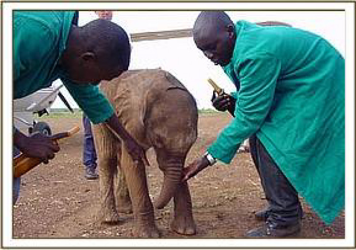 Little Sunyei with her rescuers in 2003