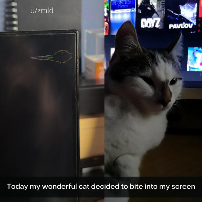 1. Cat said