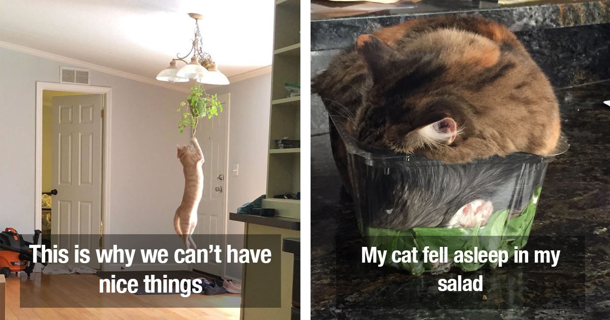 Photos Of Cats That Are The Biggest Jerks Yet We Love Them Anyway
