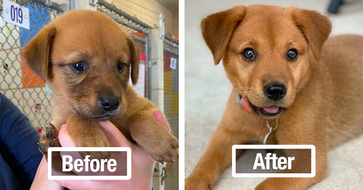 30 Heartwarming Pictures Of Dogs Before And After Adoption