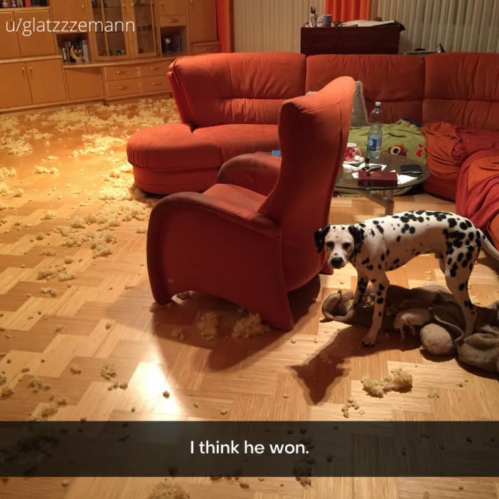 10. A great battle took place between the dog and the stuffy.