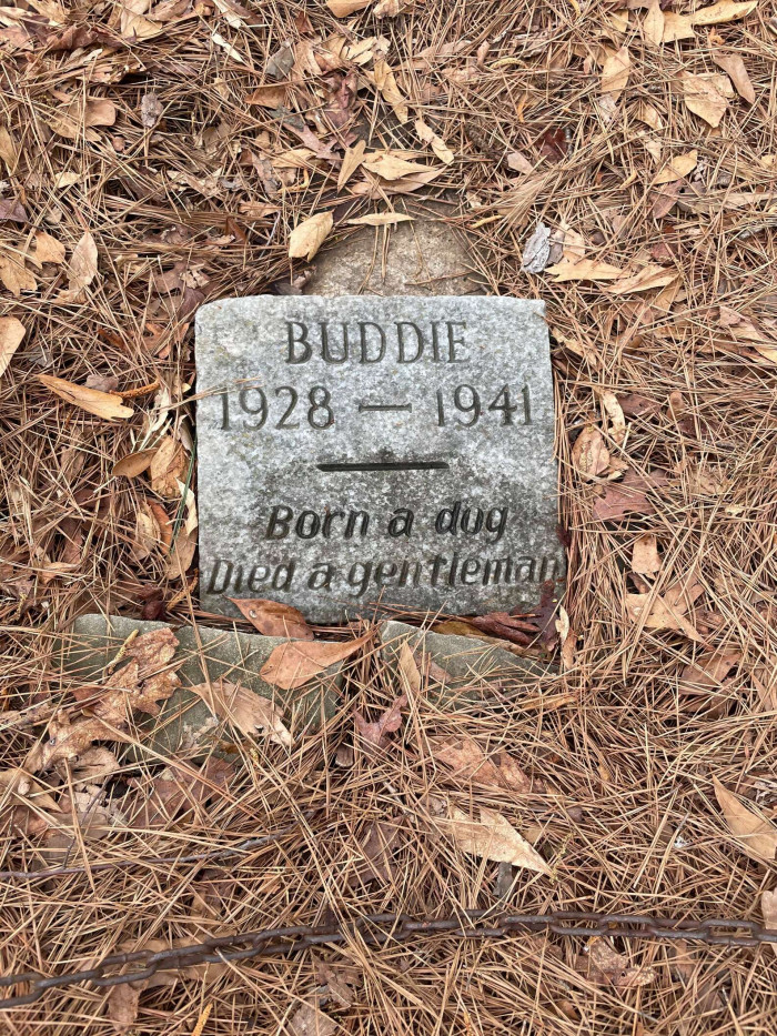 Zach was touched, but he wondered why Buddie had been buried all by himself in a public park.