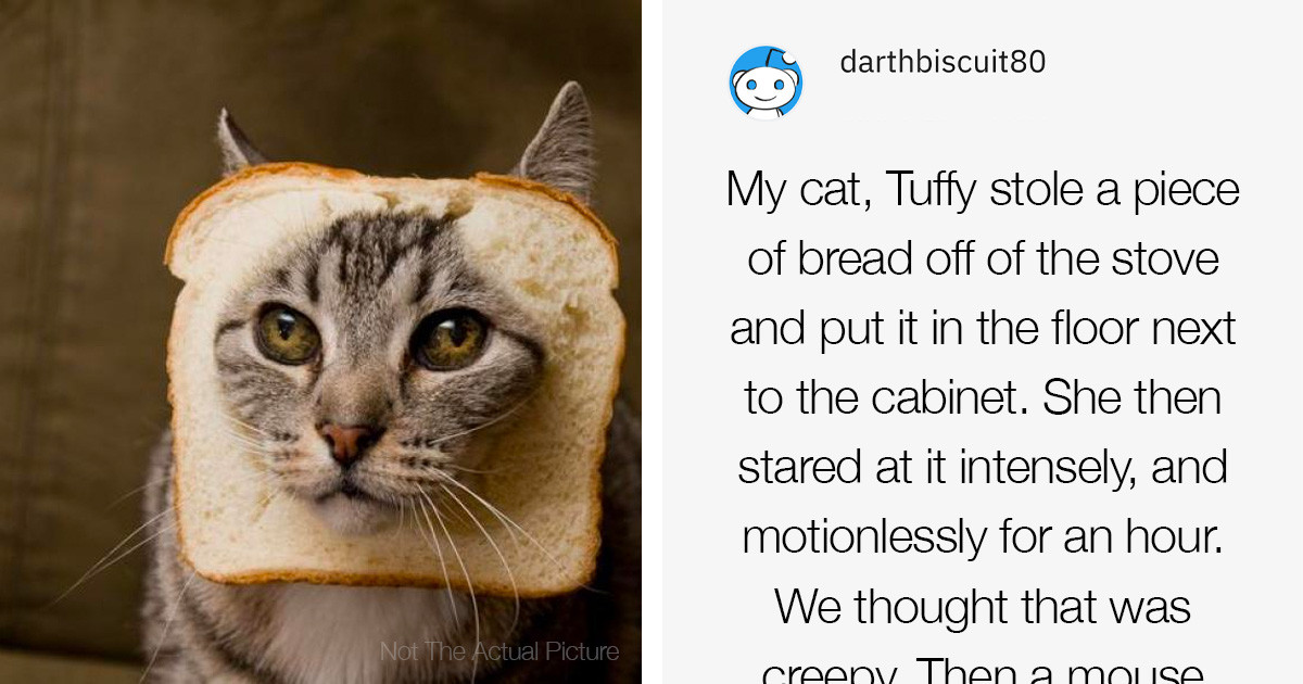 People Share The Most Creepily Intelligent Thing That Their Pet Has Done And We Are Spooked