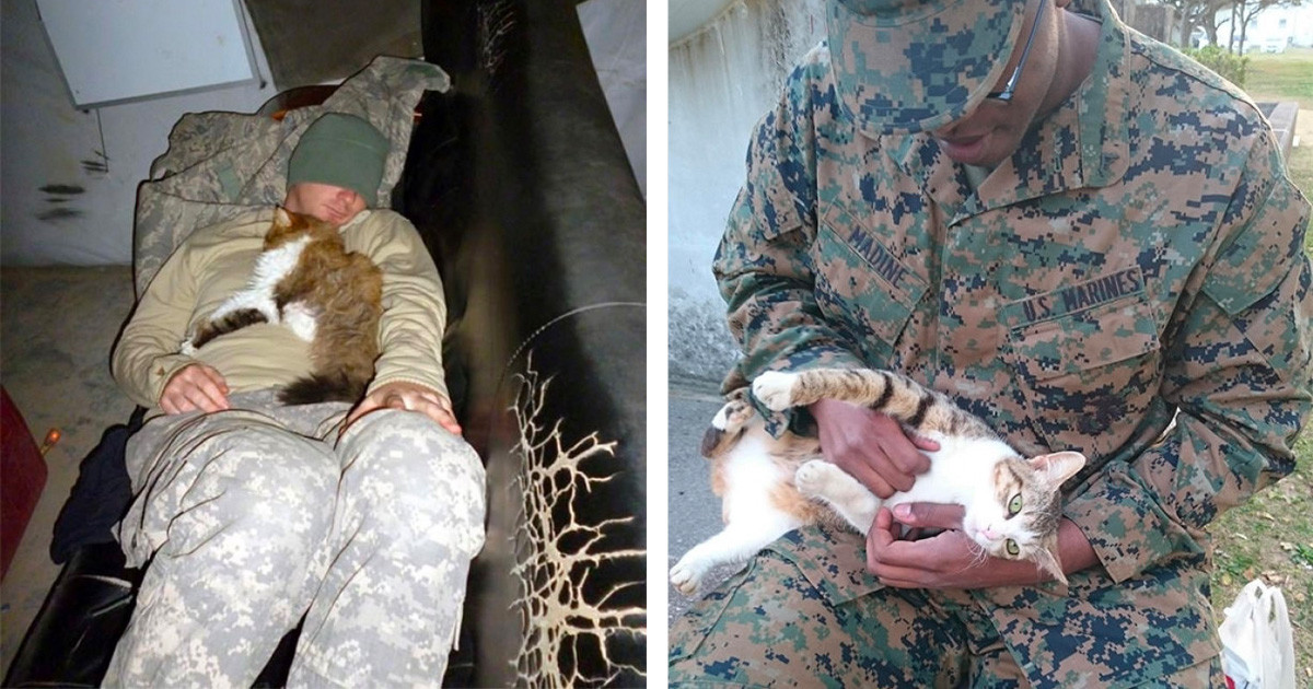 Soldiers Who Decided To Spend Some Quality Time With Random Cats While On Duty