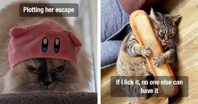 Cats Lately Have Been Living Their Best Lives Being As Weird As Possible