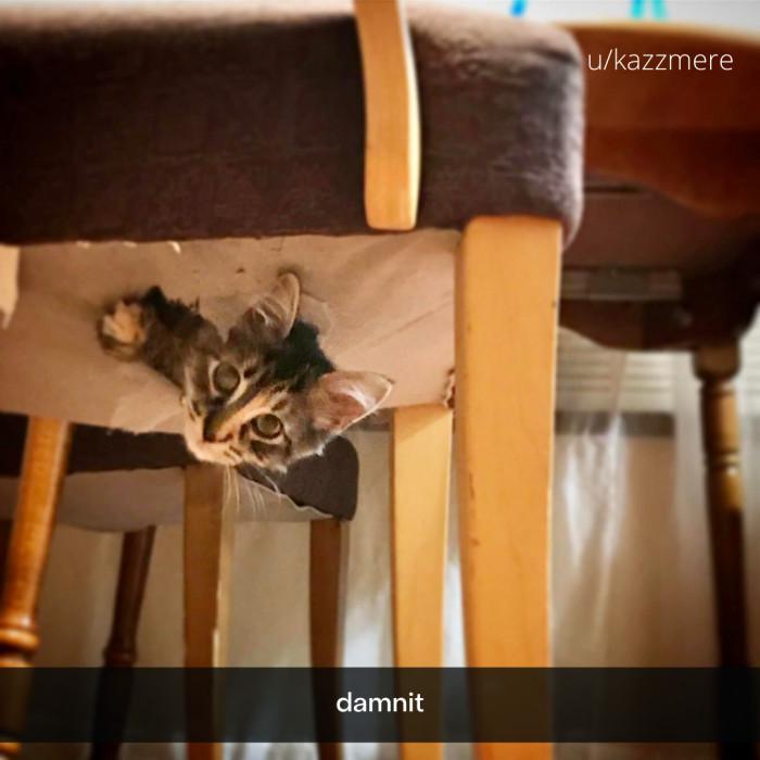 4. Creative Kitty Cat