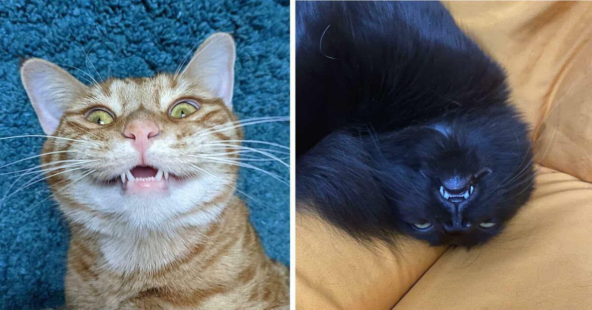 Ever Seen A Cat's Teeth? You're About To Fall In Love 50 Times!