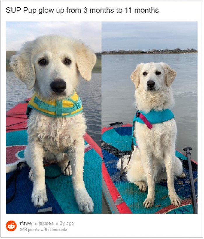 5. Adventure dog