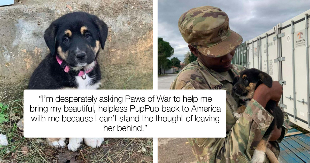 Army Sergeant Has A Heartwarming Reunion With A Puppy She Saved While Serving Overseas