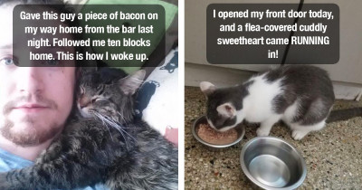 15 People Share Photos Of Cats That Unexpectedly Showed Up In Their Homes