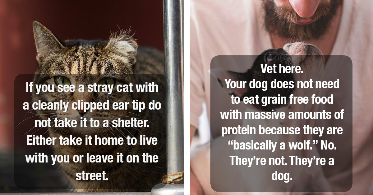 Veterinarians Share Biggest Delusions Pet Owners Have About Their Pets