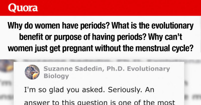 "Scientist Brilliantly Answers The Question ""What Is The Evolutionary Purpose Of Menstruation?"""