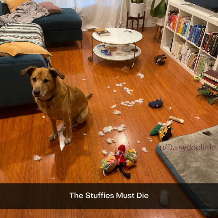 13. They simply must, and you should support your dog's desire to destroy the stuffy.