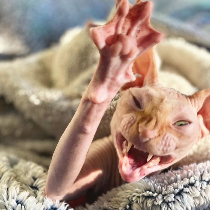 #11 I Caught A Yawn