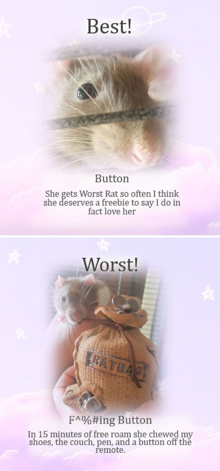 We love a multi-talented rat!