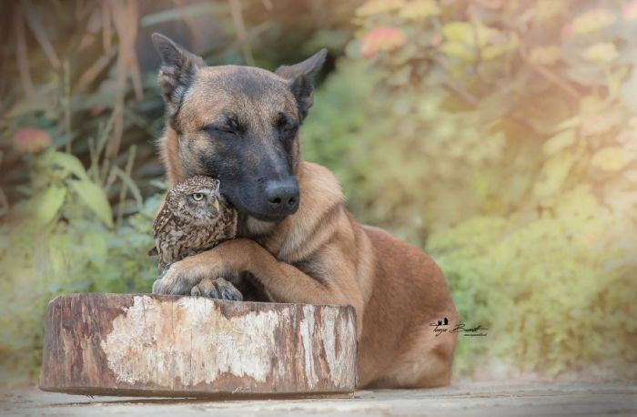 Have you ever seen a dog hug an owl before?
