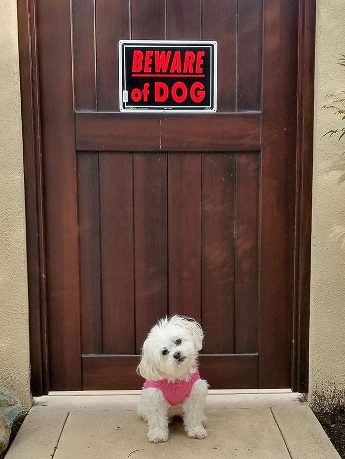 Mãe # 11 Colocar este sinal no nosso portão, o pai disse que é publicidade falsa. Olhe para mim, eu não colocaria o medo no coração de qualquer um que tentasse entrar?