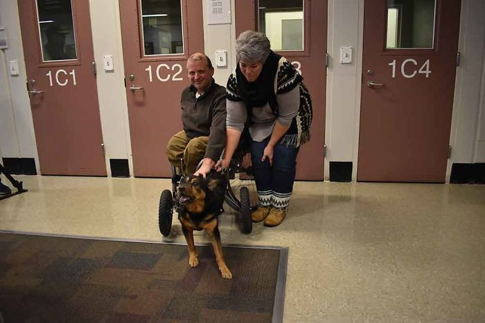 When Darrell and Sue Rider saw Bandit on Facebook, they knew they needed to meet him. Darrell felt a connection with Bandit immediately as he happens to be in a wheelchair as well.