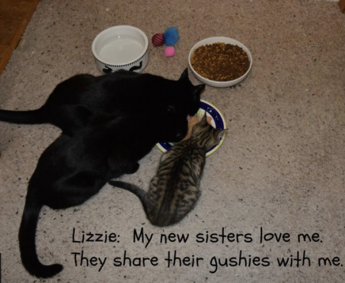 The pair were adopted together to a loving home where they also have two other feline friends to play and cuddle with.