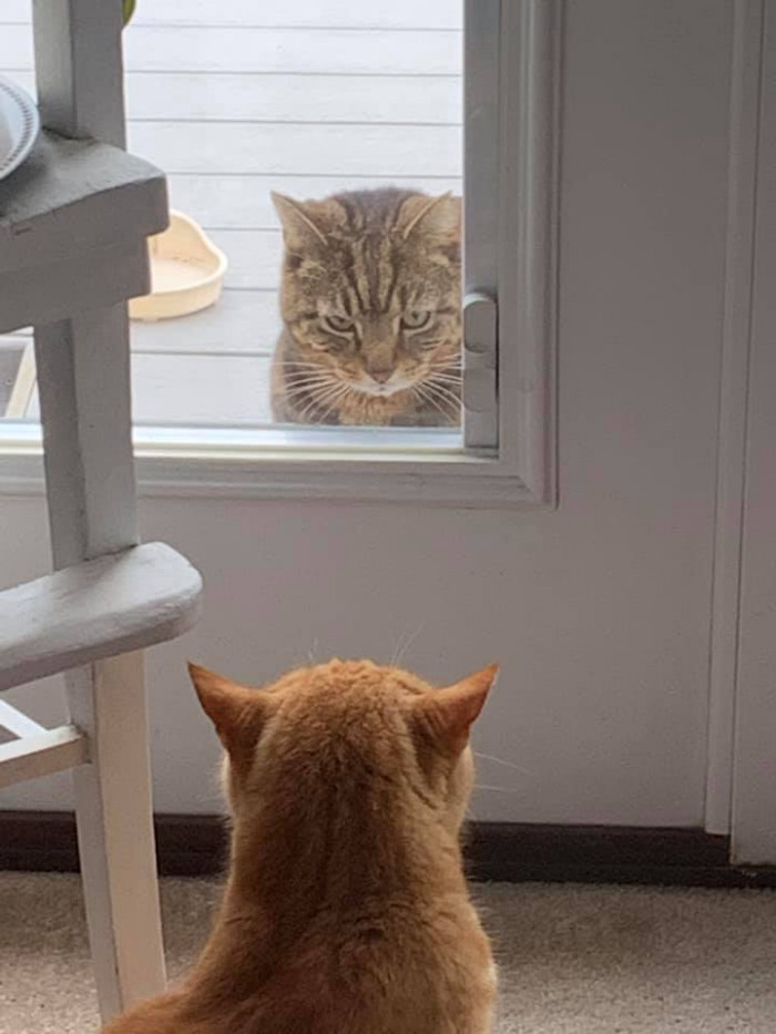 """4. """"My mom sent me this. Neither of these cats belong to my parents."""""""