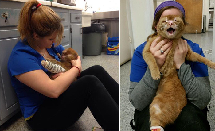 Since he is a permanent resident in the vet clinic, Russel started to help other patients