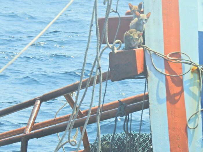 Thai Navy Officers were investigating wreckage to check for an oil spill, when First-Class Petty Officer Wichit Pukdeelon noticed that there were four cats huddled on the sinking boat