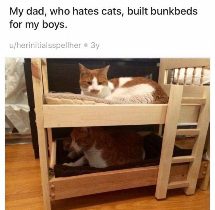 4. Dad: