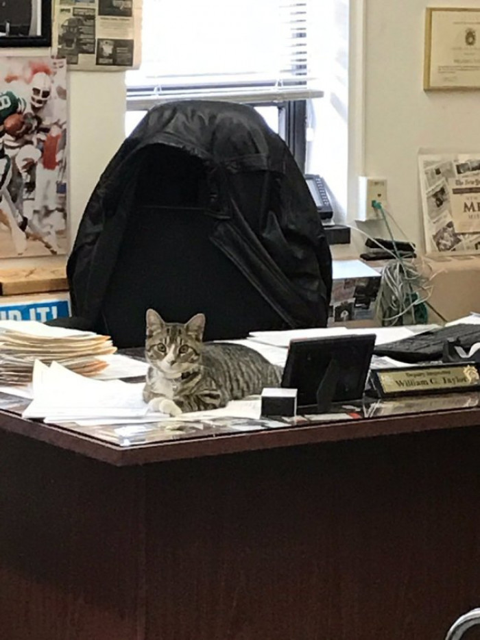 """""""He's definitely lifted spirits. There's not one person here, cop or civilian, that doesn't adore this cat,"""" Deputy Inspector William Taylor told the New York Post. """"He has the run of the precinct. He took control of the place right away."""""""