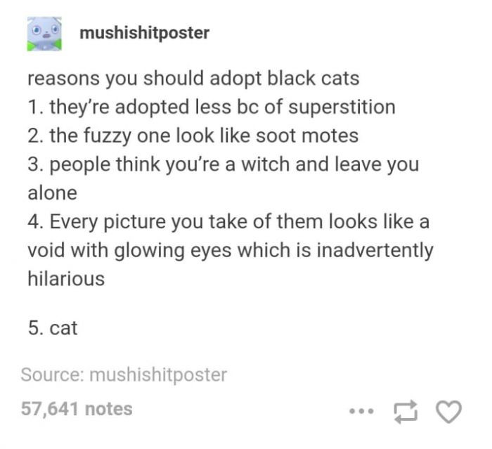 11. Black cats are the BEST cats!