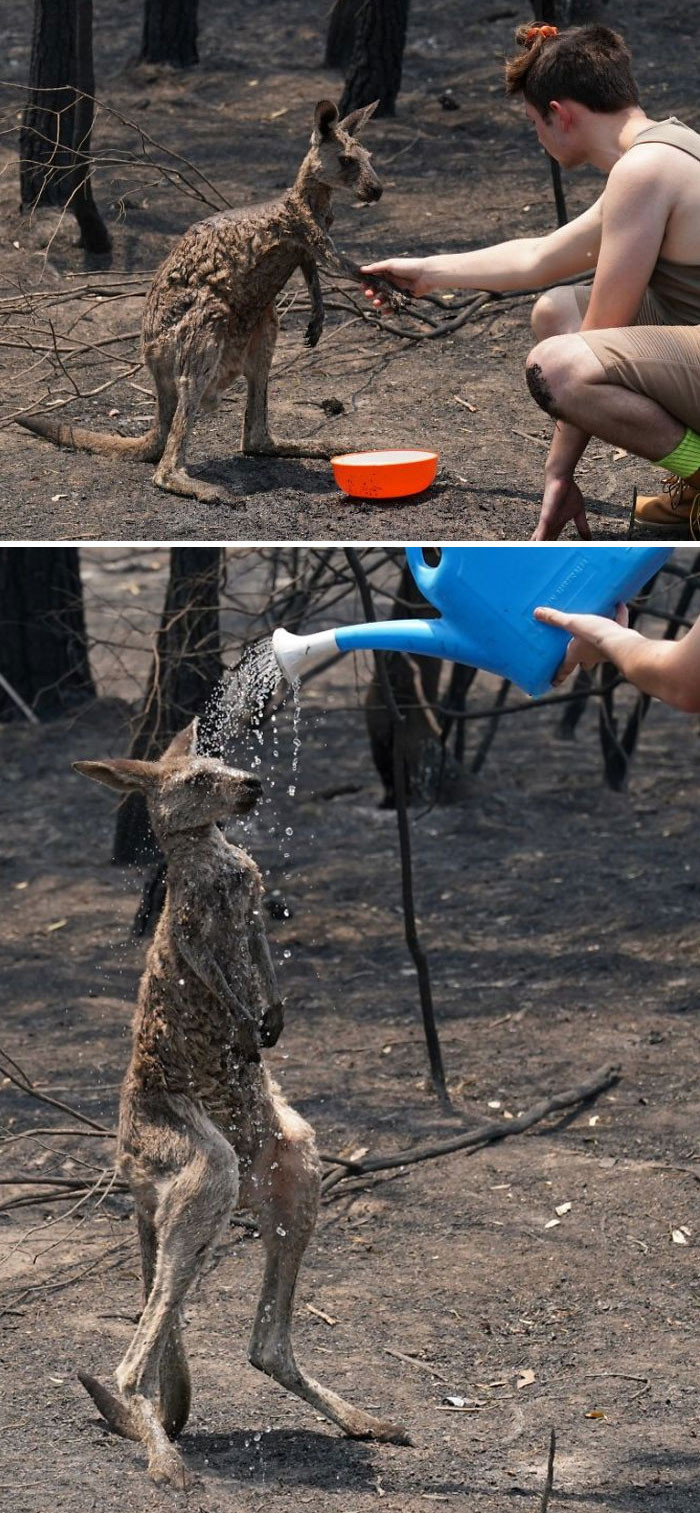 #8 This Kangaroo is burned so he asks humans for help.