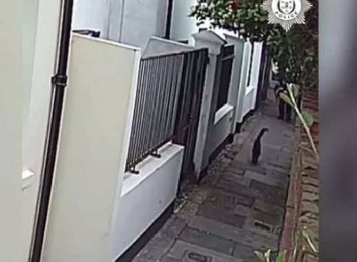 The footage of the attack: