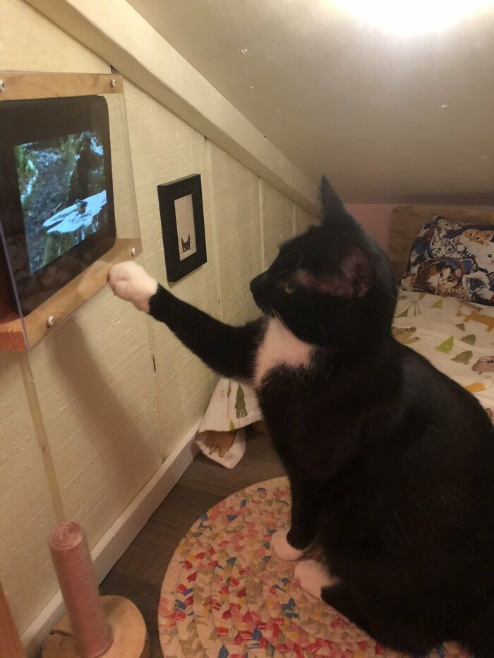 Wyatt's favorite feature of the bedroom is his very own tiny TV where he loves watching videos of birds and squirrels
