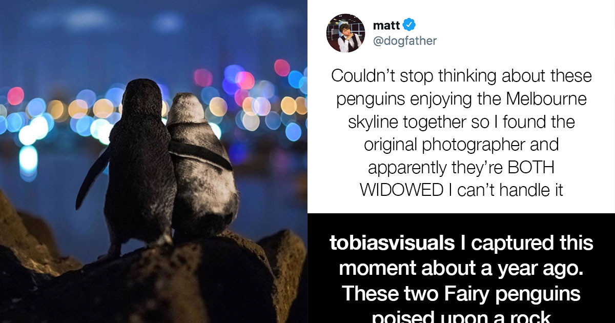 Wholesome And Hilarious Animal Tweets That Will Keep You Mentally Healthy While Stuck At Home