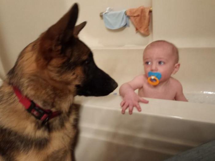 Bathtime doggo