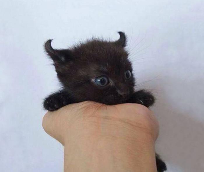14. Little devil