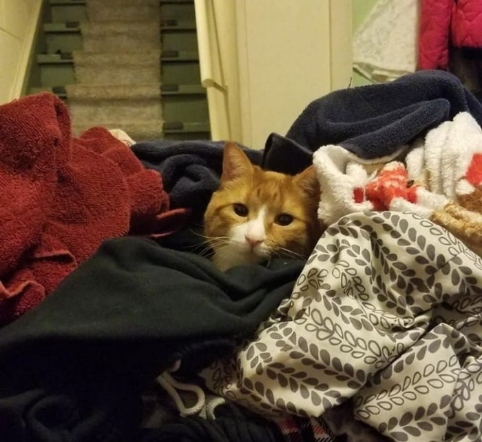 The cat in a pile of clean clothes.