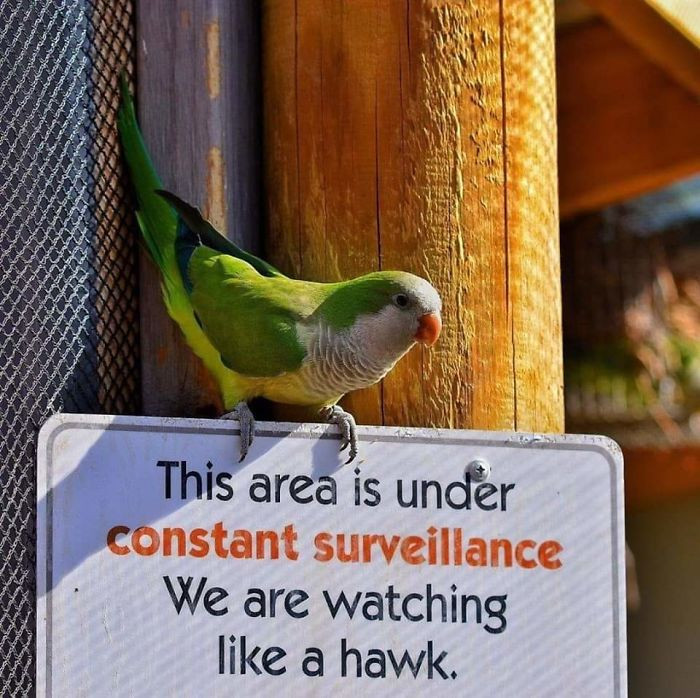 #26 Way To Be Discreet, Surveillance Drone...