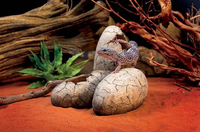 11. Dinosaur Egg Terrarium Toy